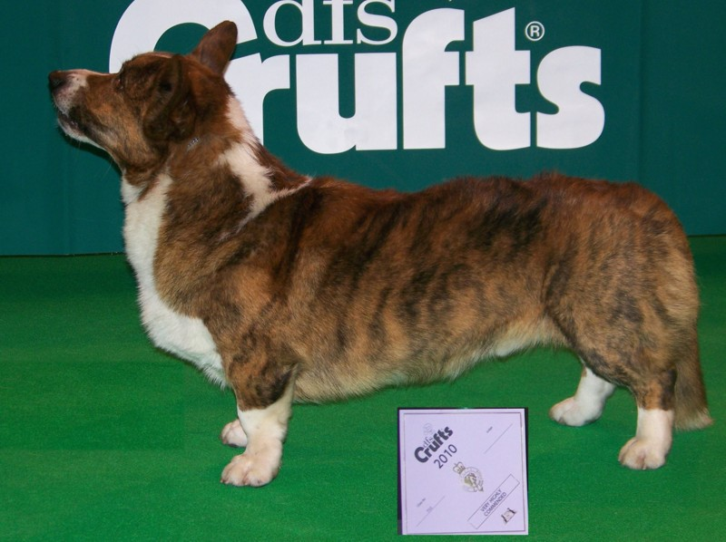 Kevin_crufts_2010_R_800_036